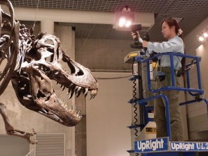 T-Rex being scanned